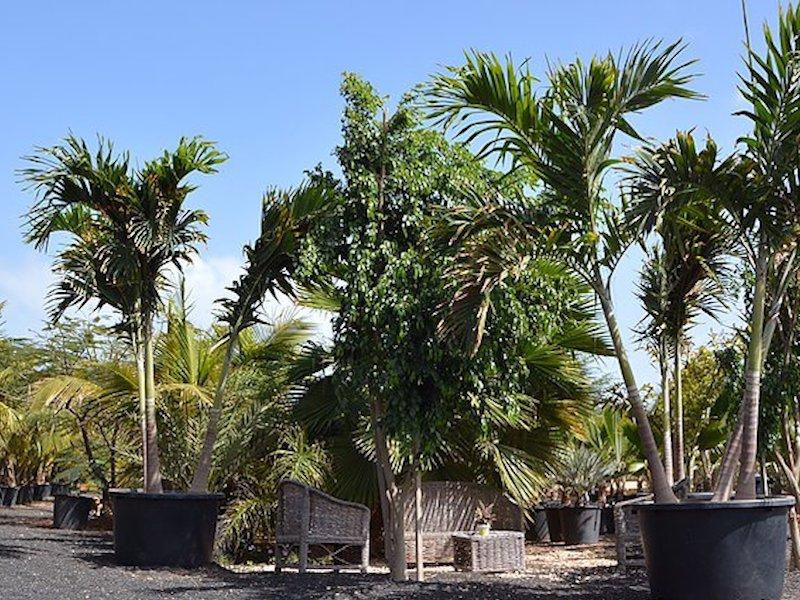 Viveiro Gardens Sal, Cape Verde