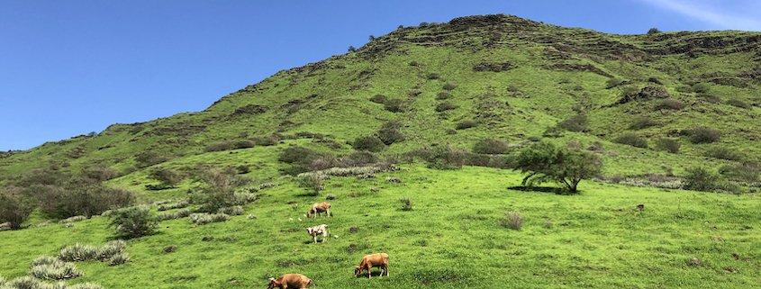 Green hills on Santiago after rain in Cape Verde
